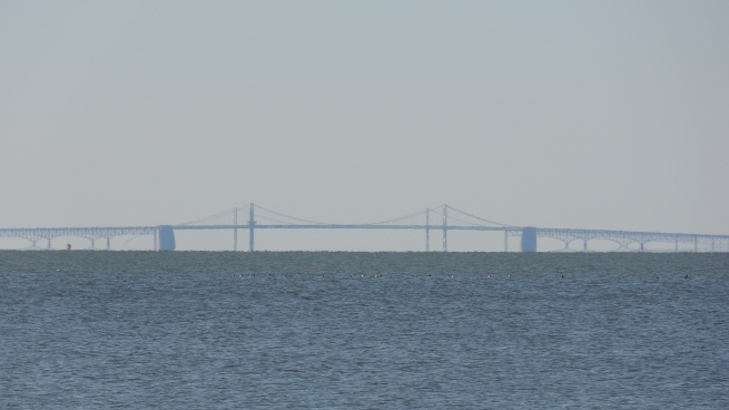 The Bay Bridge looms in the distance from the Rock Hall beach