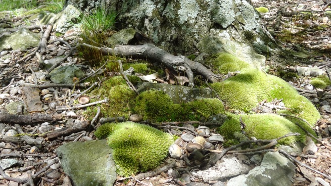 I love mossy forests, my favorite still being the woods of Fundy National Park in New Brunswick (Can.)