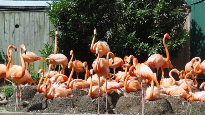 Who can't love flamingos! This was the most I'd seen since my trip to the D.R. in August 2011.