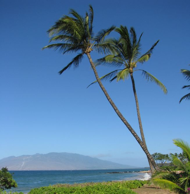SO WHERE IS THE NORTHERNMOST PALM TREE The Weekend Roady - Most northerly state usa