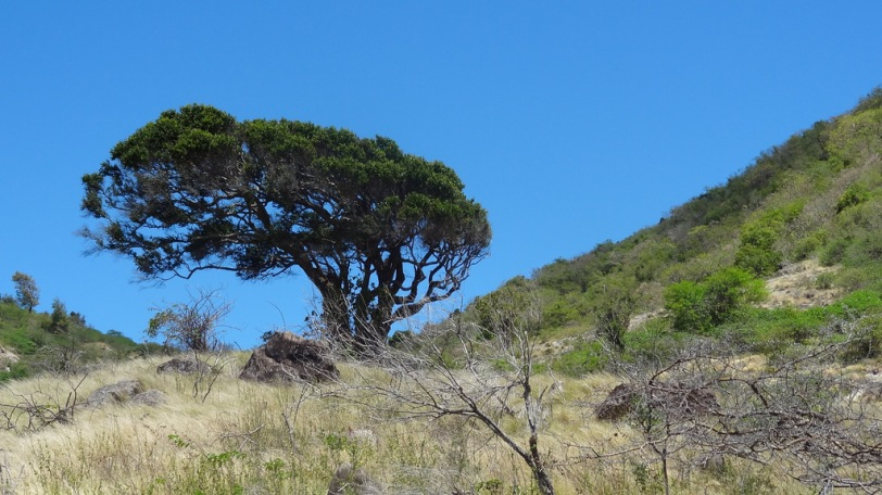 A lone tree sits atop the summit of the Rendezvous Trail