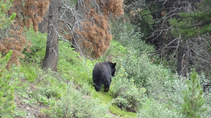 Watch for bears - we spotted two black bears at separate times during our four day journey