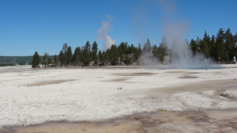 The Lower Geyser Basin was the first stop on our whirlwind Yellowstone Park day tour.