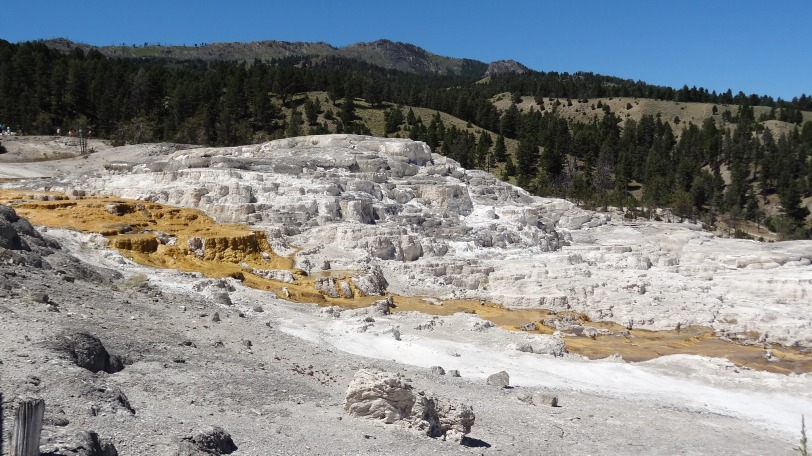 Mammoth Hot Springs and its otherworldly terraces.