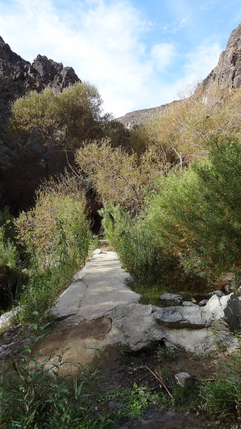 A real surprise. The Darwin Falls trail is a hidden gem in Death Valley. There is water  here! And green, luscious, vivid green!