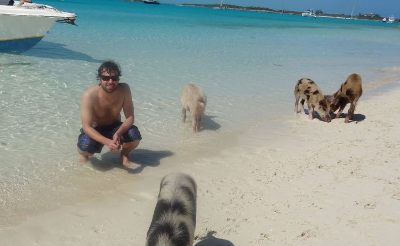 These pigs weren't interested in posing, as you can see...