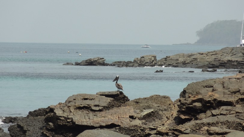 A local resident takes watch over the rockier southern coast.