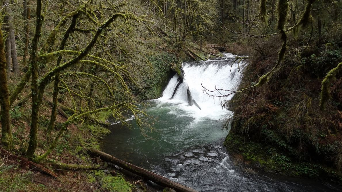 TRADING RAIN FOR WATERFALLS IN OREGON: SILVER FALLS STATE ...